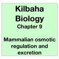 Biology Chapter 9 - Mammalian Osmotic Regulation and Excretion